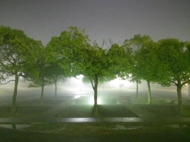 夜霧の冬の道