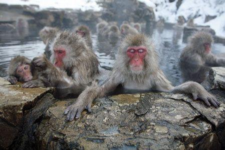 外国人の評価の高い日本の観光スポットとはどこか?