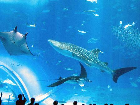 世界・アジア・日本の水族館人気ランキング